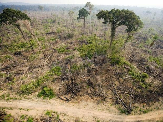 """So much of the Earth's forest has been destroyed that the tropics now emit more carbon than they capture, scientists have found. Tropical forests previously acted as a vital carbon """"sink"""", taking carbon from the atmosphere and turning it into oxygen, but the trend has reversed: they now emit almost twice as much carbon as they consume. Scientists said ending deforestation and degradation in the tropics could reduce global carbon emissions by 8 per cent."""