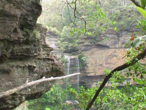 Blue Mountains Wildlife Tour waterfalls walk NSW Outback Tours