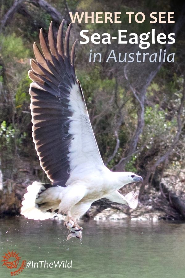 On our Maximum Wildlife tour we travel to East Gippsland, in