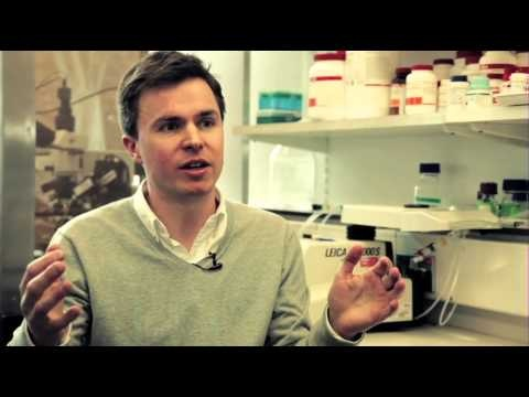 Dopamine neurons and Parkinsons disease