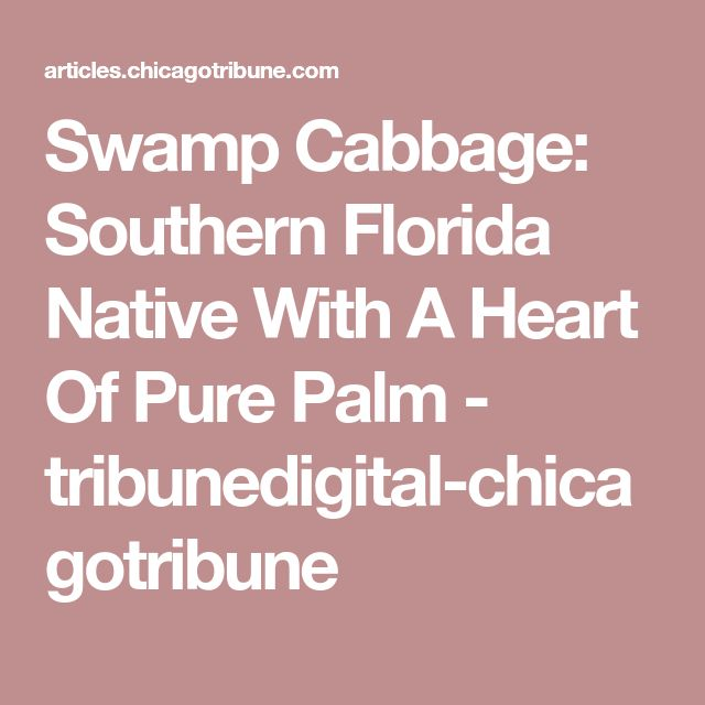 Swamp Cabbage: Southern Florida Native With A Heart Of Pure Palm - tribunedigital-chicagotribune