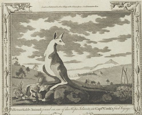A remarkable animal. Kangaroo found on one of the Hope Islands in Captain Cook's first voyage. Drawn by George Stubbs, engraved by Rennoldson. From the collections of Mitchell Library, State Library of New South Wales : http://www.acmssearch.sl.nsw.gov.au/search/itemDetailPaged.cgi?itemID=862235