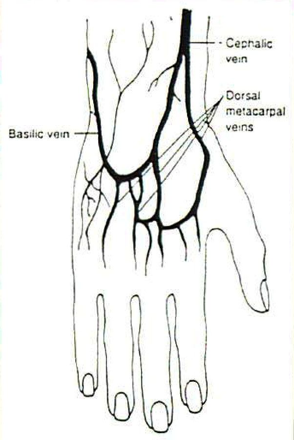 how to cut veins in the wrist