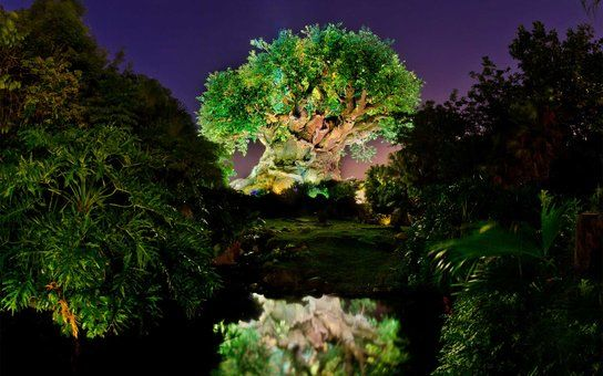 Disney World's Animal Kingdom Will Open at Night! Here's What You Need to Know