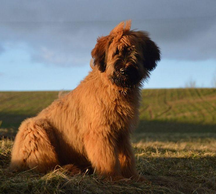 Calamity Jack Dalido as a puppy