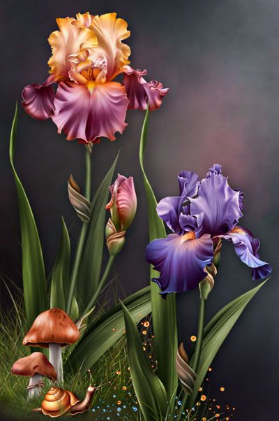 "Barnali Bagchi ~ ""Iris Dreams"" ~ moonbeam1212."