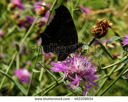 Butterfly on  flowers close-up. Selective focus