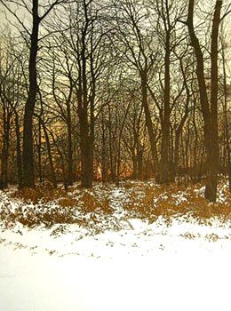 "Phil Greenwood ""Forest Light"" Etching & aquatint"