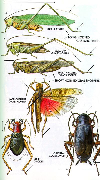 The Major Insect Orders Speicimen Pinterest The O