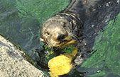 1000+ images about Public Aquariums on Pinterest Trout fishing, Cold ...