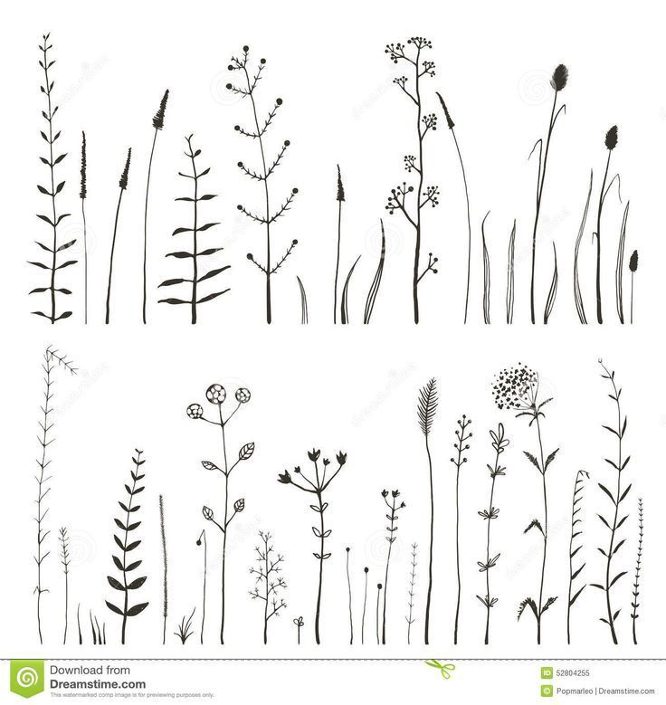Sketchy Wild Field Flowers and Grass on White Roya…