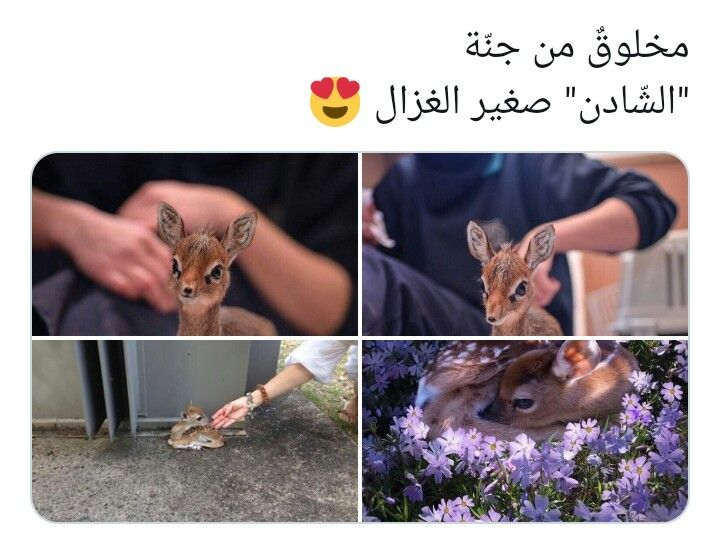 Pin By ملكه زماني On Queen Quotes Cute Baby Animals Cute Creatures Drawings Of Friends