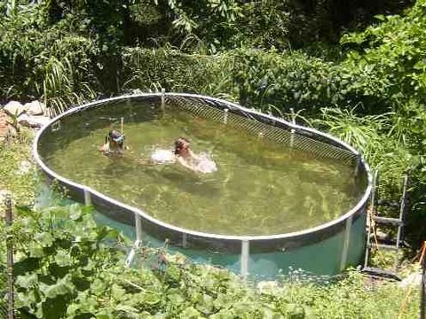 97 best ponds n pools images on pinterest natural for Koi pond and swimming pool