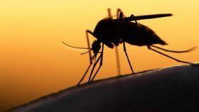 Durante la temporada de lluvias la proliferación del dengue tiende a repuntar: IMSS
