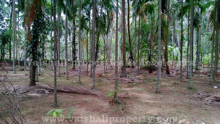 Excellent 30 cents residential land for sale in near Parambath near Andikode, Calicut. This rectangular plot is just 150 mtrs from the state highway to Atholi