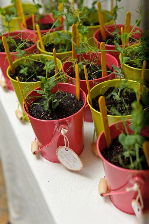 Party Favor Idea: potted plants that the little one can help water and care for! #partyfavor
