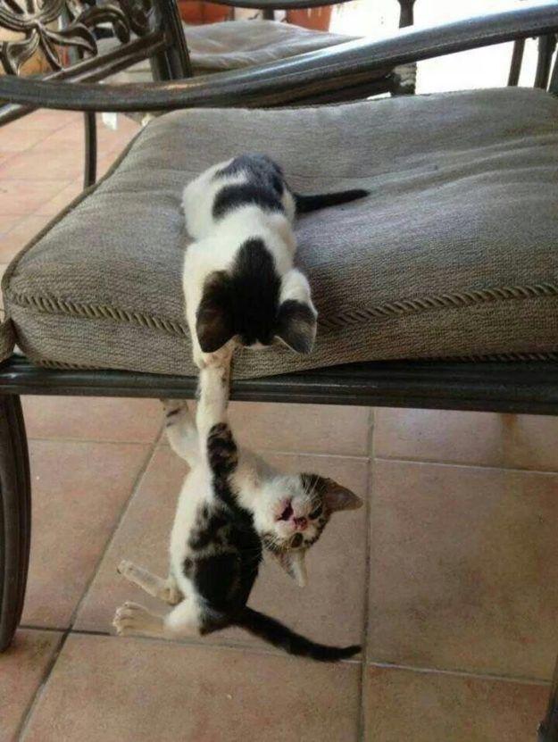 And these kittens who are re-enacting The Lion King. | 42 Pictures That Will Make You Almost Too Happy