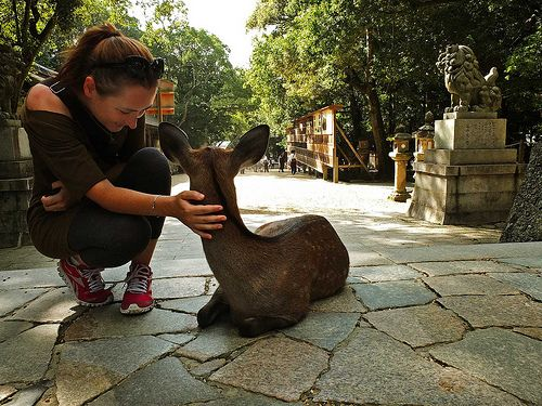 Japan, Nara, just speachless place  #hapakuna
