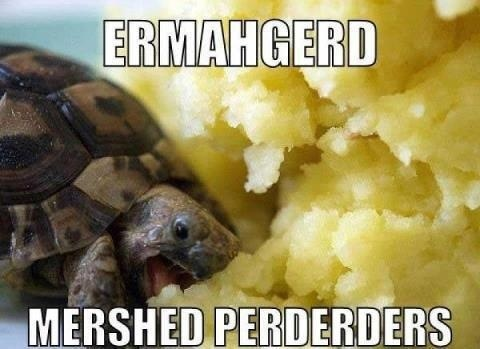 ermahgerd!: Funny Things, Mashed Potatoes, Turtles Eating, Funny Stuff, Mersh Perderd, Nom Nom, Eating Mashed, Baby Turtles, Animal