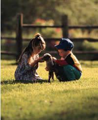 Preschool Farm Animals Theme