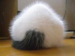 【富山】おにぎり猫|猫のおしり・白黒猫・おにぎり・猫の里親【富山ブログ】