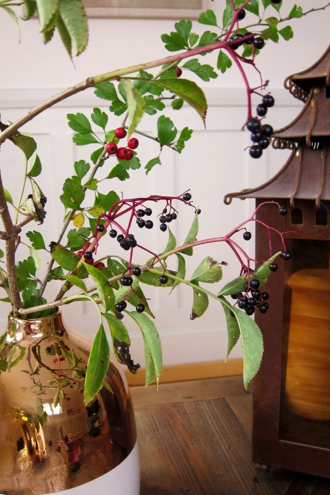 autumn berry branches - fall decoration