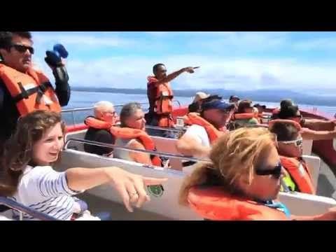 Ocean Blue Adventures - Whale Watching / Ocean Safaris / Dolphin Encounters in Plettenberg Bay Garden Route