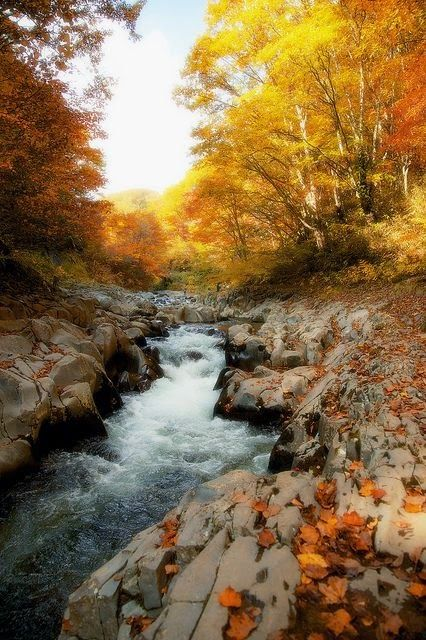 17 Best Images About Rocky Top Tennessee On Pinterest