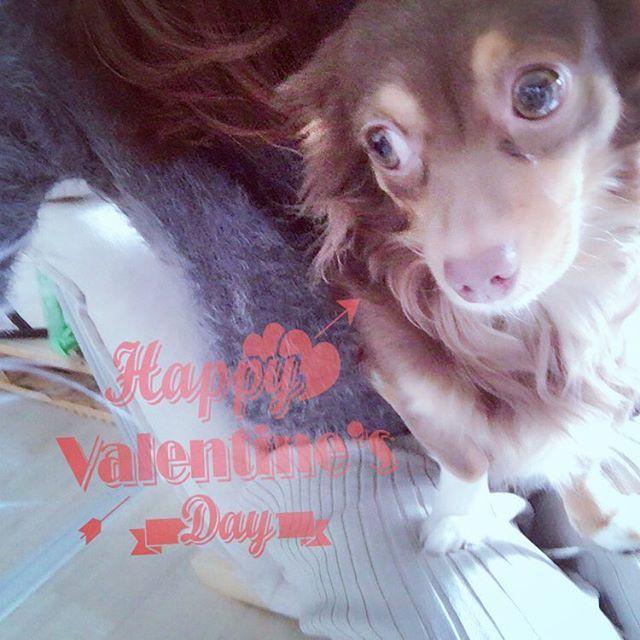 癒しをありがとう😊愛を込めて〜〜 #犬は家族#恐ろしいほどの愛情#dog #dogstagram #dogs #いぬ #犬 #チワックス#ミックス#愛犬#あずき