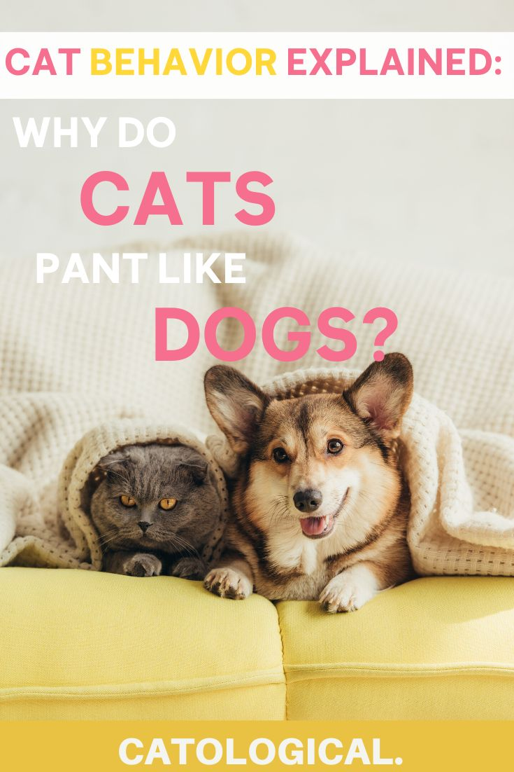 Why is your cat breathing as heavily as your dog? Click