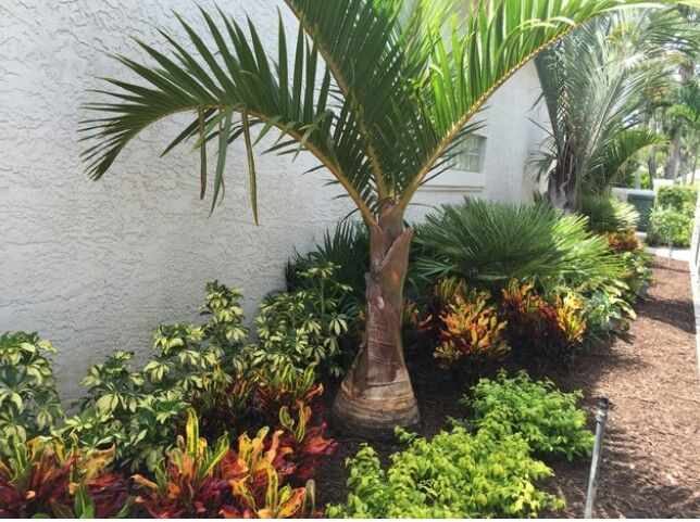 25 best ideas about tropical landscaping on pinterest for Tropical garden design