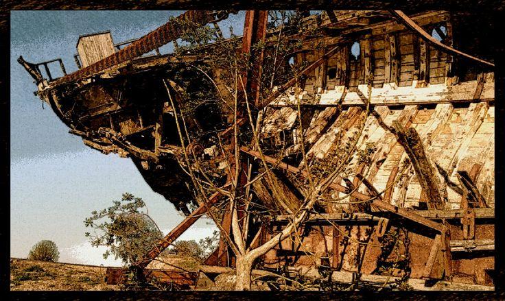 El árbol y el naufragio - Fotografía intervenida - San Luis, Argentina - Autora: Alejandra Etcheverry