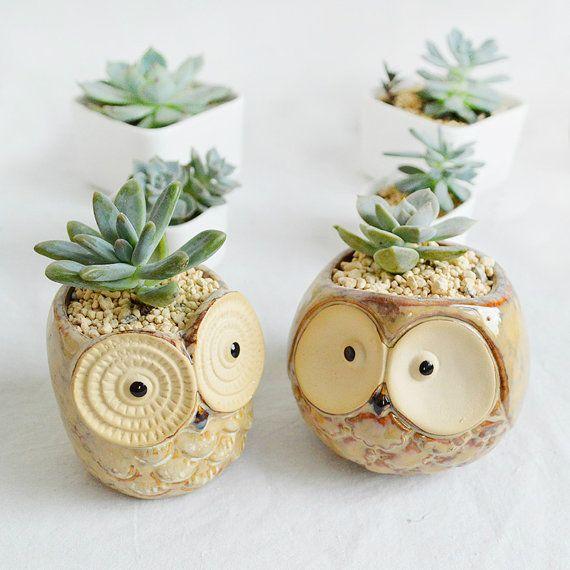 Owl Ceramic Succulent Planter Cartoon Porcelain by MarukoCoco