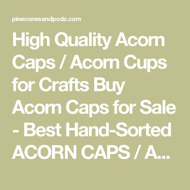 High Quality Acorn Caps / Acorn Cups for Crafts Buy Acorn Caps for Sale - Best Hand-Sorted ACORN CAPS / ACORN CUPS Acorn Cups are commonly referred to as Acorn Caps or Acorn Tops DEEP CUPS - Scarlet Oak & Black Oak Acorn Cups - Scaled, golden beige, deep acorn cups SHALLOW CUPS - Shumard Oak & Red Oak Acorn Caps - Larger shallow acorn cups We pick only the Best Quality for Crafts. No cracks, chips, splits or dirt. All our Caps for crafts are carefully picked, cleaned, washed, sorted and…