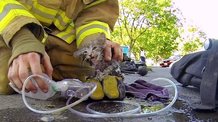Helmet Camera Captures Firefighter Bringing A Tiny Kitten Back To Life