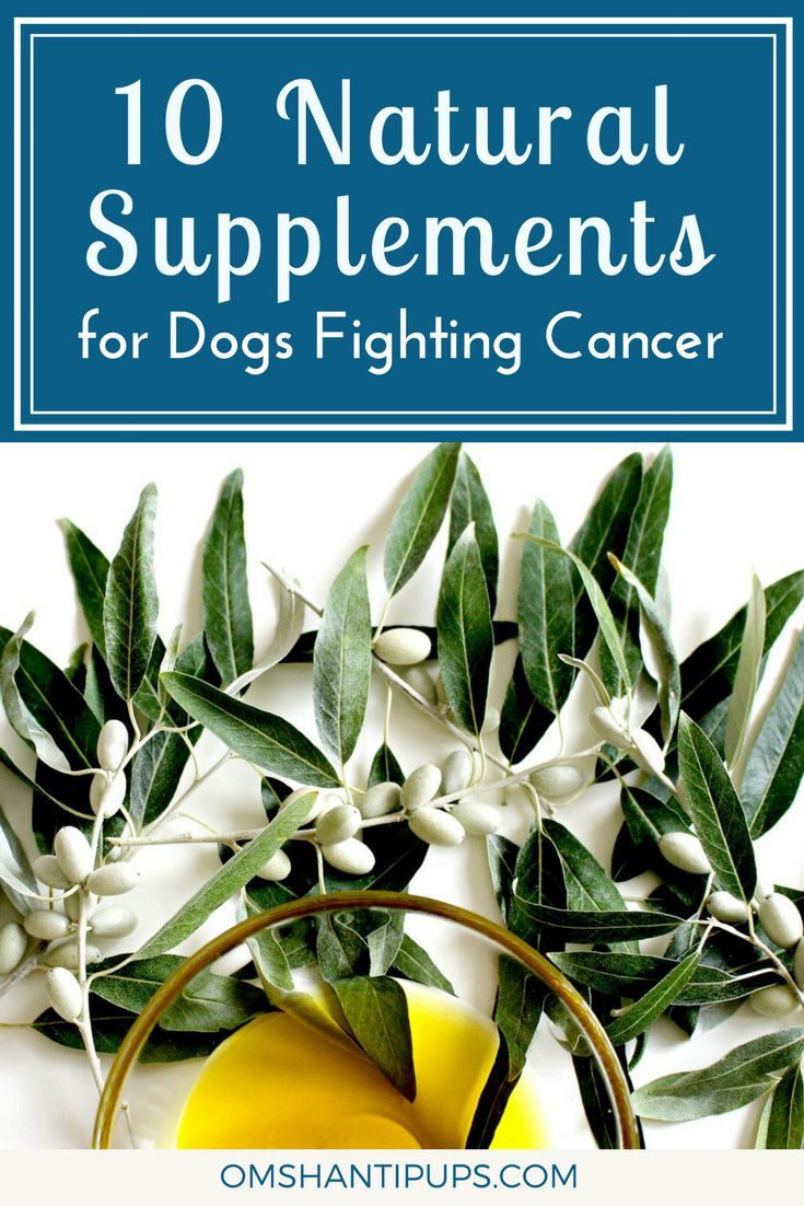 A cancer diagnosis is terrifying, and we would give anything to help our pups through it. These herbs, supplements, and oils have beneficial elements to support your pet through this tough journey. via @OmShantiPups