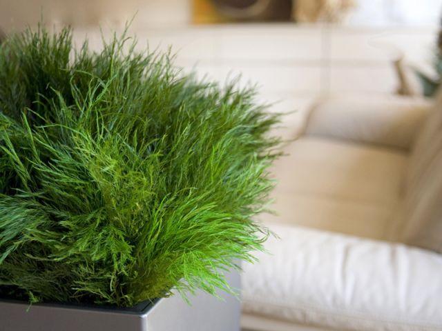 Plante exotique int rieur plantes exotiques d ext rieur for Plantes exotiques