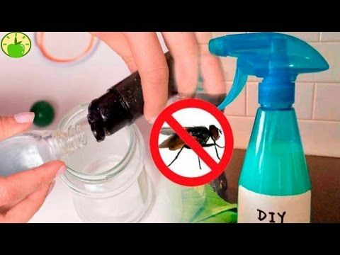 ✔Mix These 2 Ingredients and Your House Will BE FREE OF FLIES - How to get rid of flies in the house - YouTube