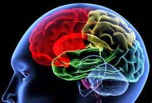 8 ejercicios para entrenar tu cerebro.  Es de sobra conocido que el cerebro es un músculo más, es decir, que si no se entrena se 'oxida'. Hay muchas maneras de entrenar el cerebro. Últimamente están de moda los juegos de memoria, rapidez y destreza mental, pero además hay otros modos de ejercitar tu cerebro... Leer mas en el link de la foto   #autoayuda  #salud #vida #vidasana #relax #entrenamiento #life