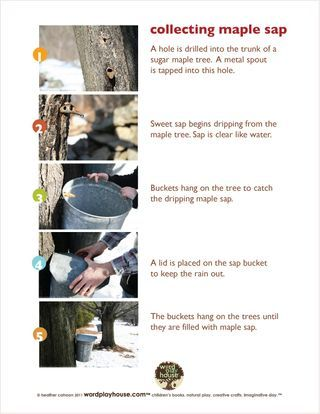 show children how to make maple syrup with free maple sugaring printables