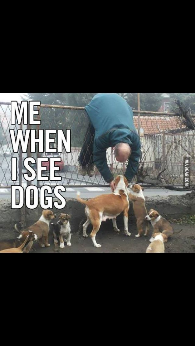 Me when I see dogs.
