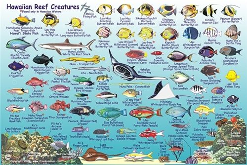 Hawaiian Islands - Reef Creatures Fish ID Card by Frankos Maps Ltd ...