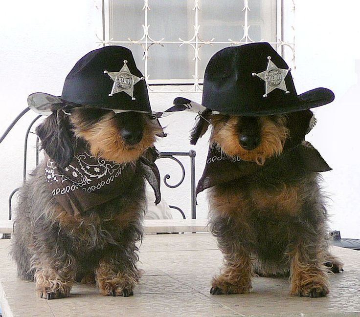 Deputy Dachshunds