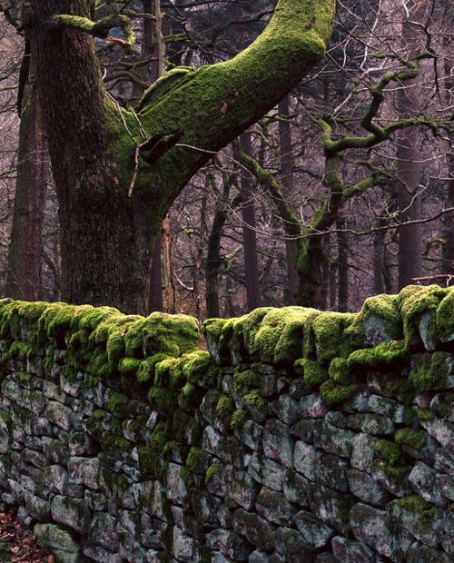 Mossy stone walls...reminds me of Ireland and a mystic feeling of the wilderness.  Just love!