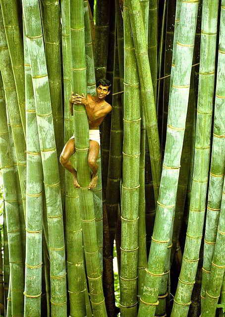 allasianflavours:   Man climbing bamboo tree - Sri Lanka 83 sc0005 c by Francesco Veronesi
