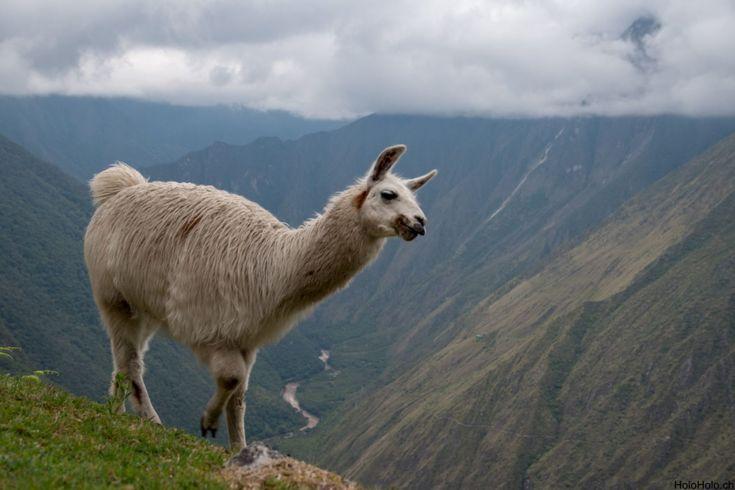Auf dem Inka Trail zum Machu Picchu
