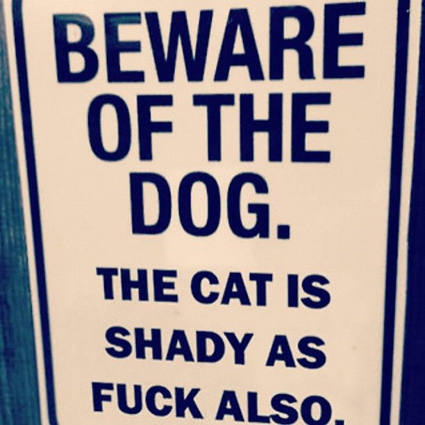 haha I needed this for my beloved cat mo