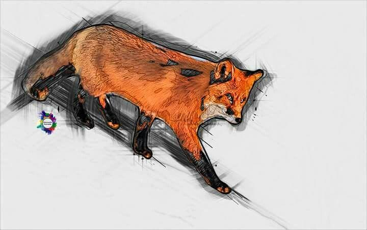 Fox in lines