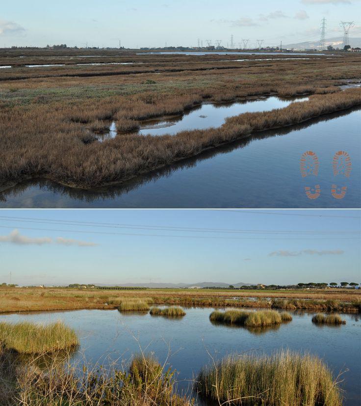 Gli specchi d'acqua salmastra di Orti oasi #WWF #Orti-Bottagone #Piombino #maremma