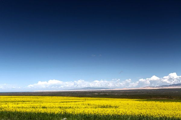 Qinghai Lake is the largest inland salt water lake in China covering an area of 4,573 square kilometers.
